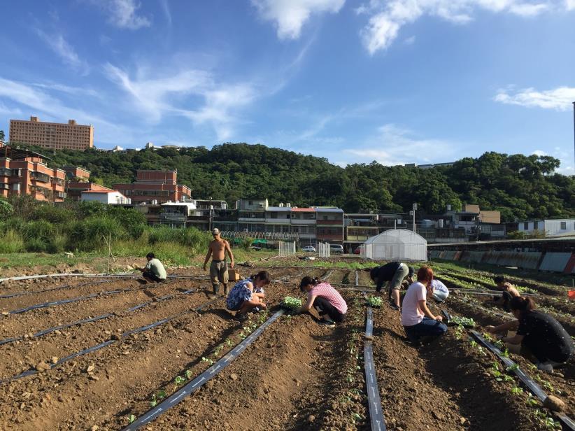 澆灌生命的園丁   以琳農場培育邊緣少年就業計畫