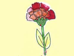 康乃馨的花語 是愛